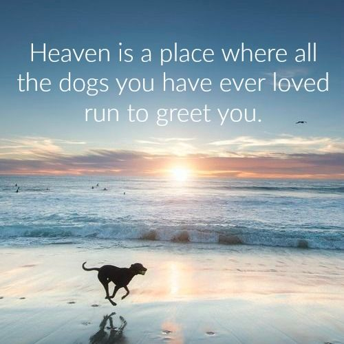 Heaven for dogs