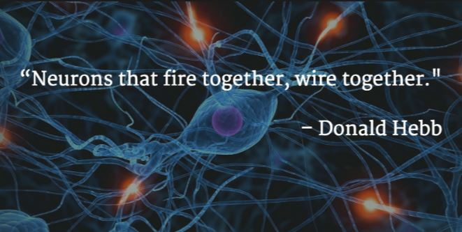 hebbs law neurons that fire together wire together