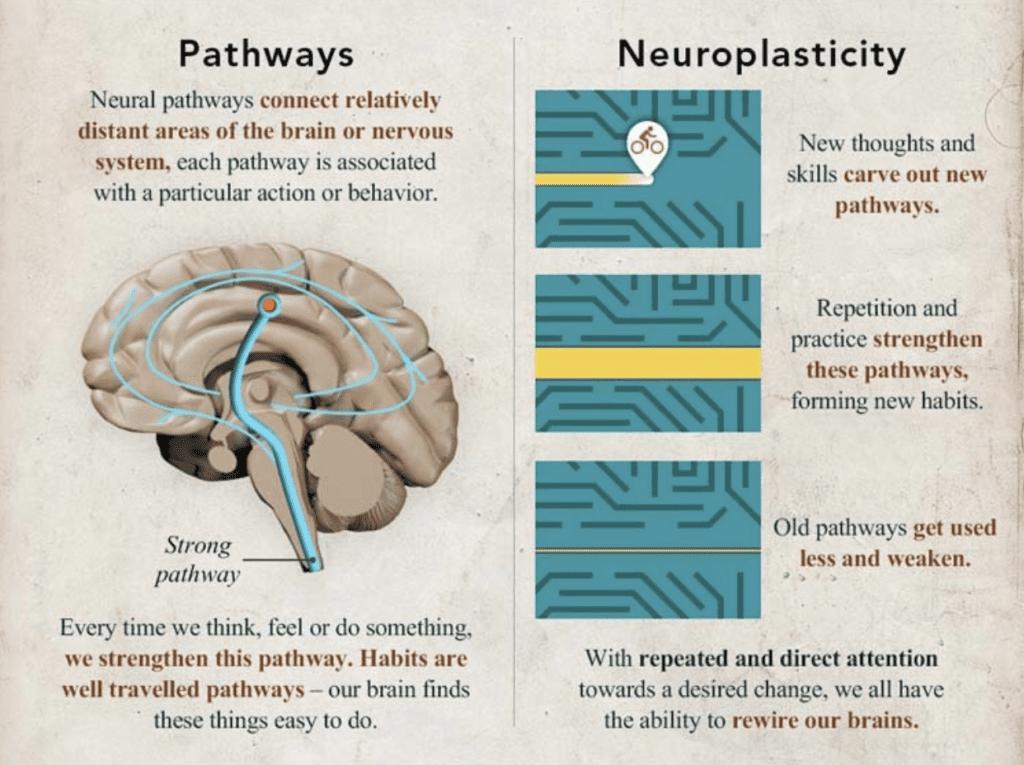 Neuroplasticity - Pathways