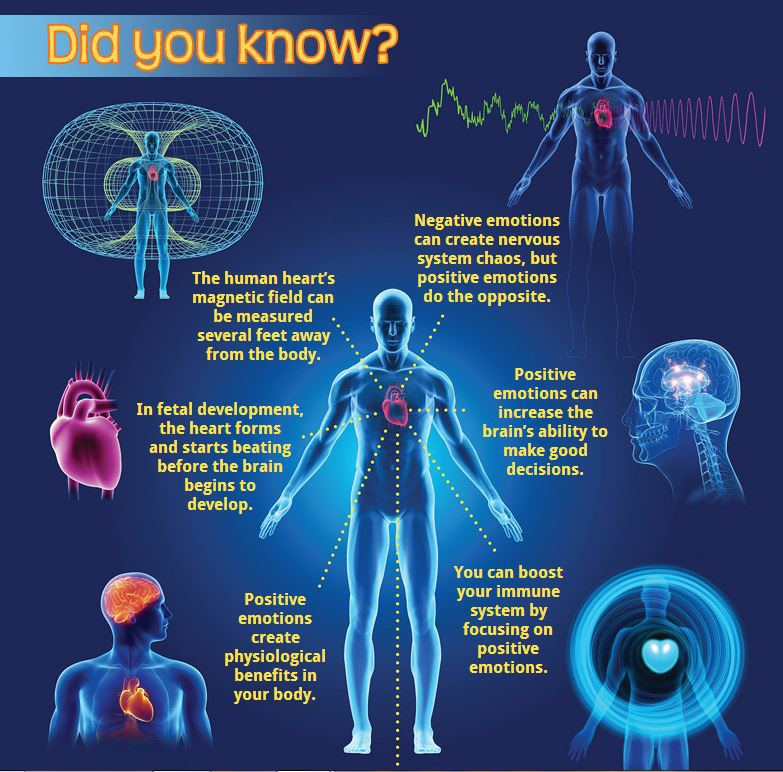 heart has a brain magnetic fields