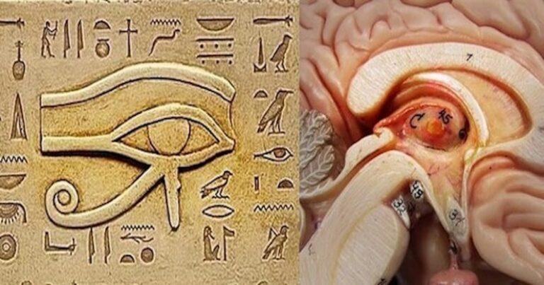 pineal gland eye of horus