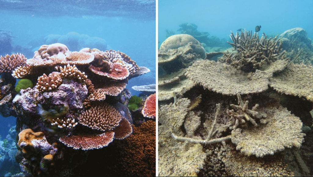 why are coral reefs dying